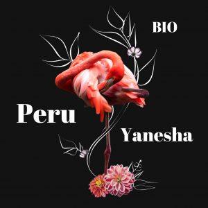 Peruvian Flamingo